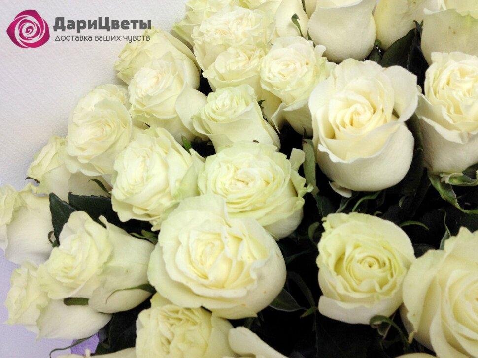 роза белый медведь фото и описание